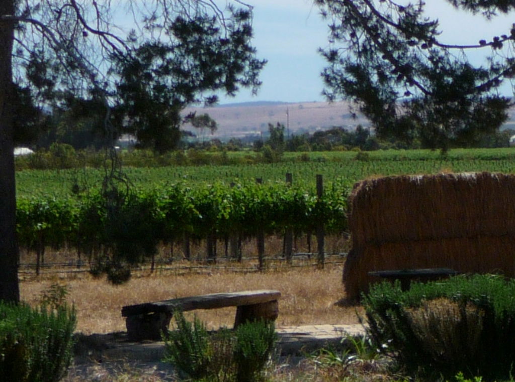 Sit in the vineyard at Angas Plains Wines Langhorne Creek